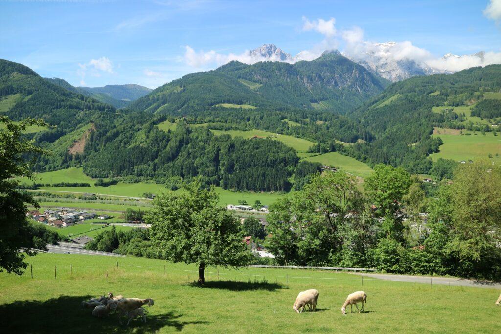 Bio-Bauernhof Einberghof Pfarrwerfen Alpenpanorama