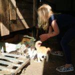 bio-Bauernhof Einberghof Katzenbabys