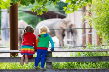Kids watching elephant at the zoo