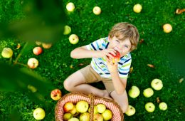 Little kid boy picking red apples on farm autumn