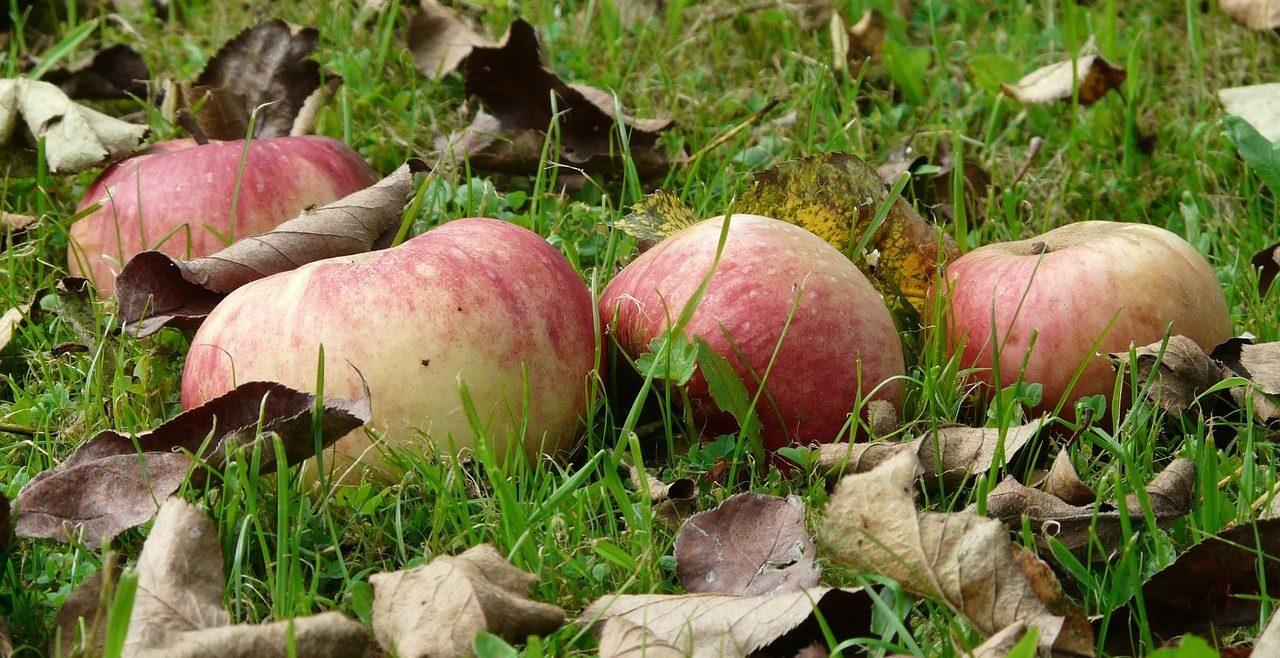 apple-9159_1280
