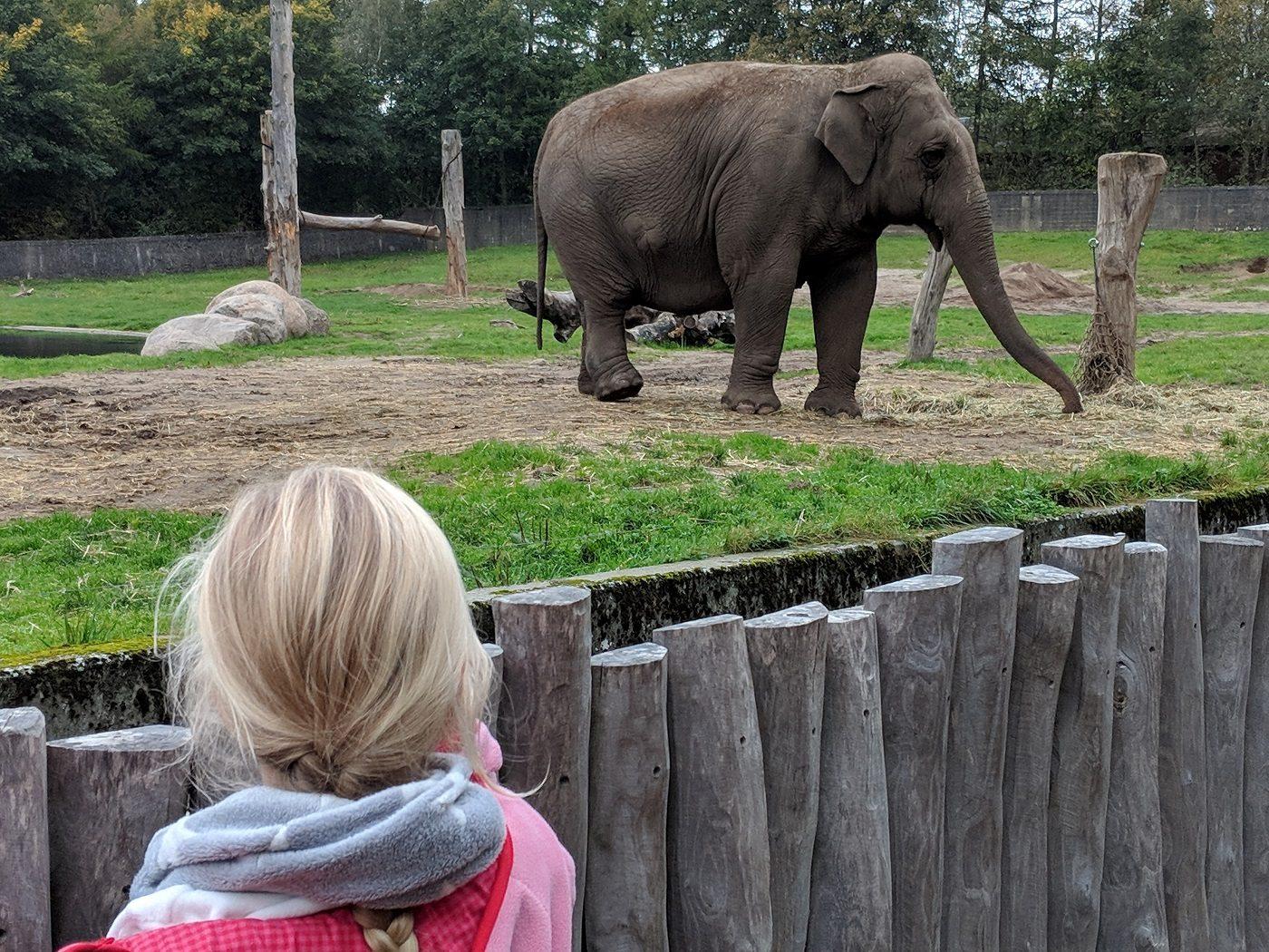 Givskud Zoo Elefant
