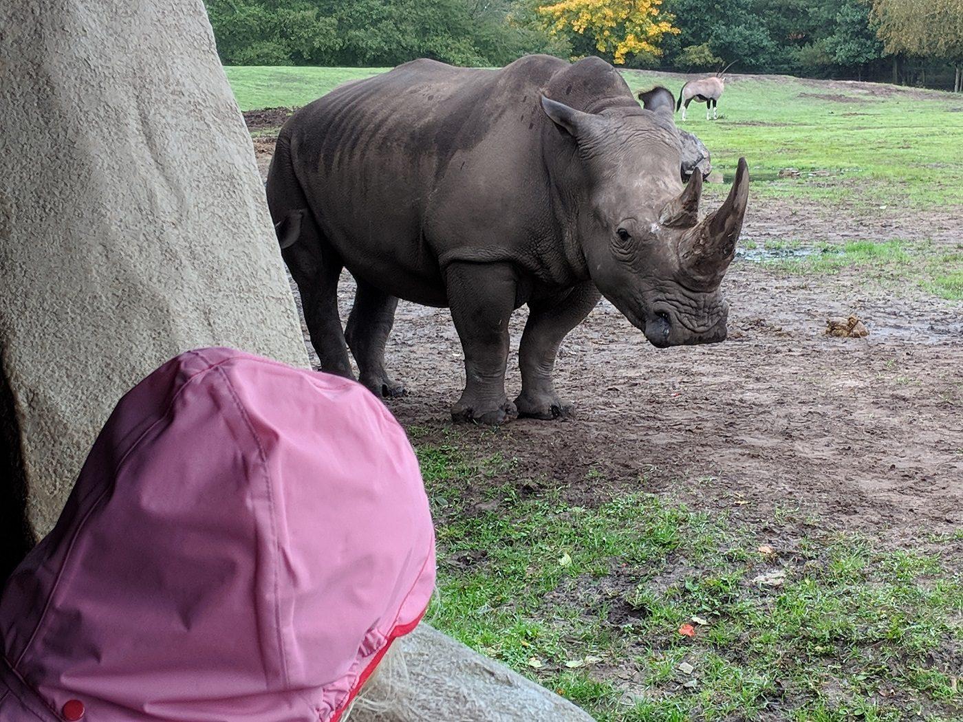 Givskud Zoo Nashorn