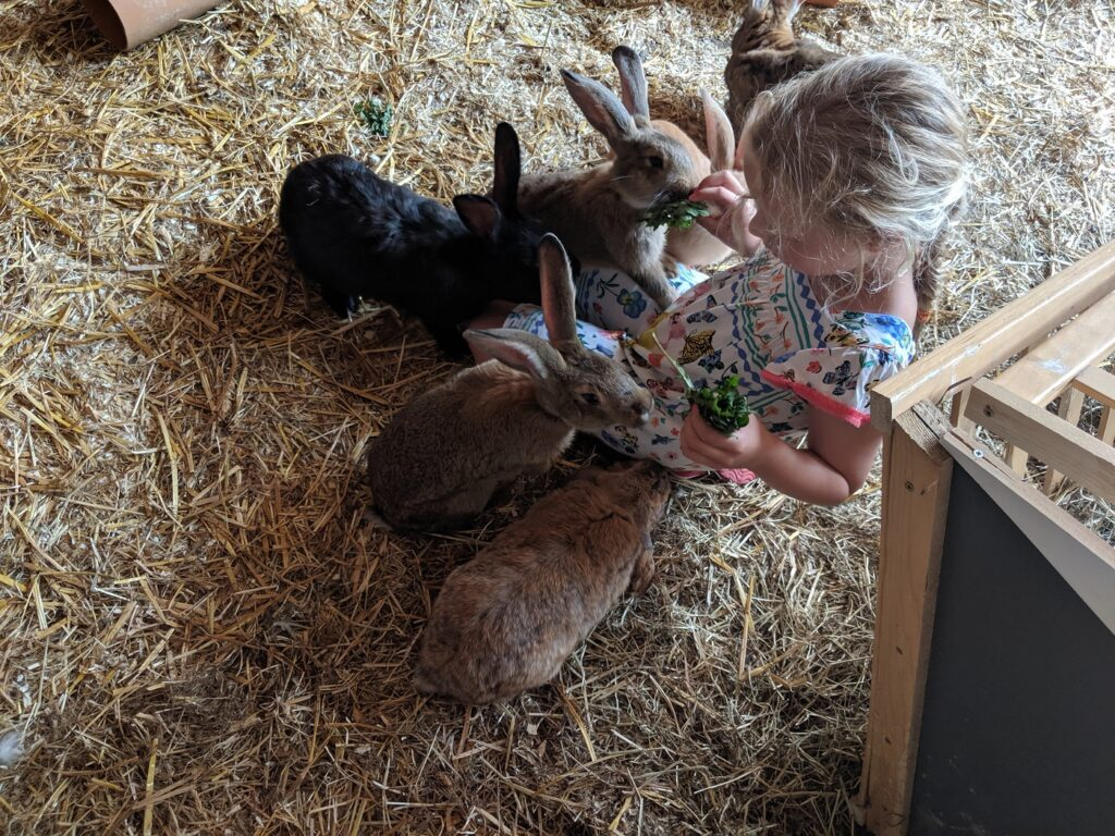 Familotel Gut Landegge Kaninchen