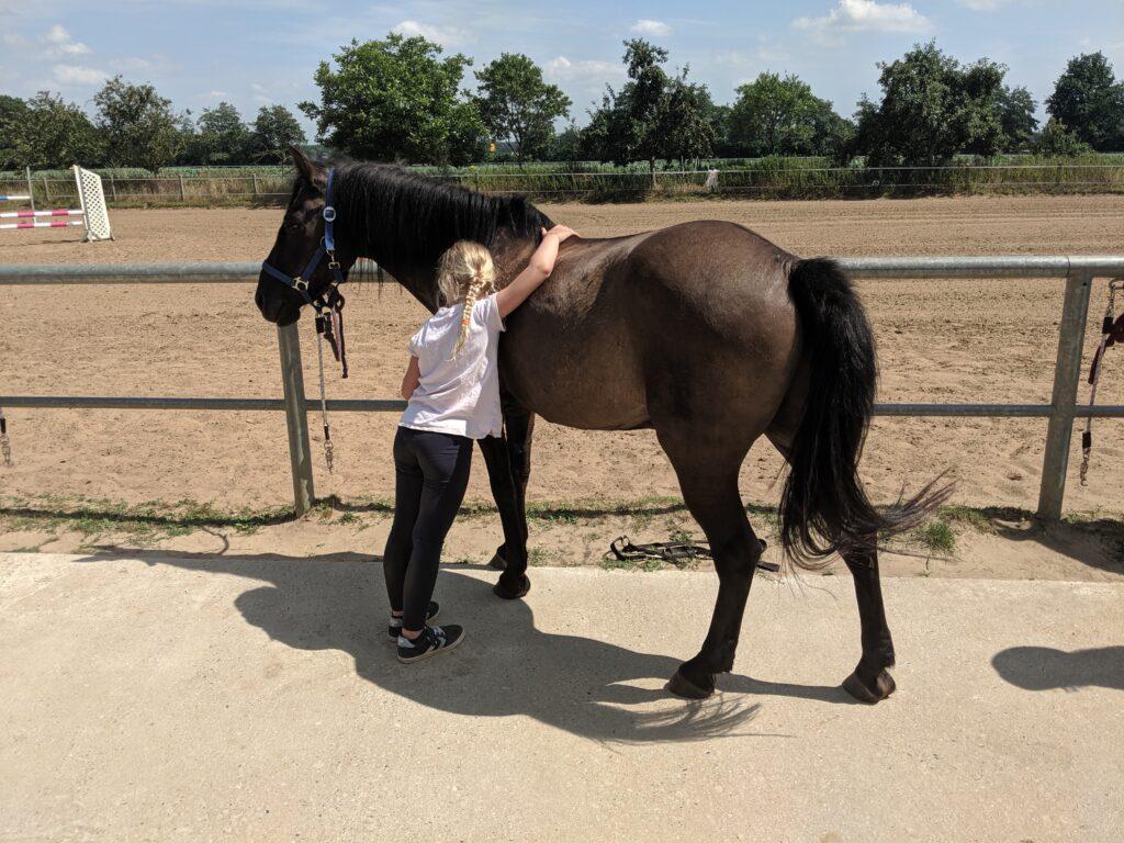 Familotel Gut Landegge Pferde