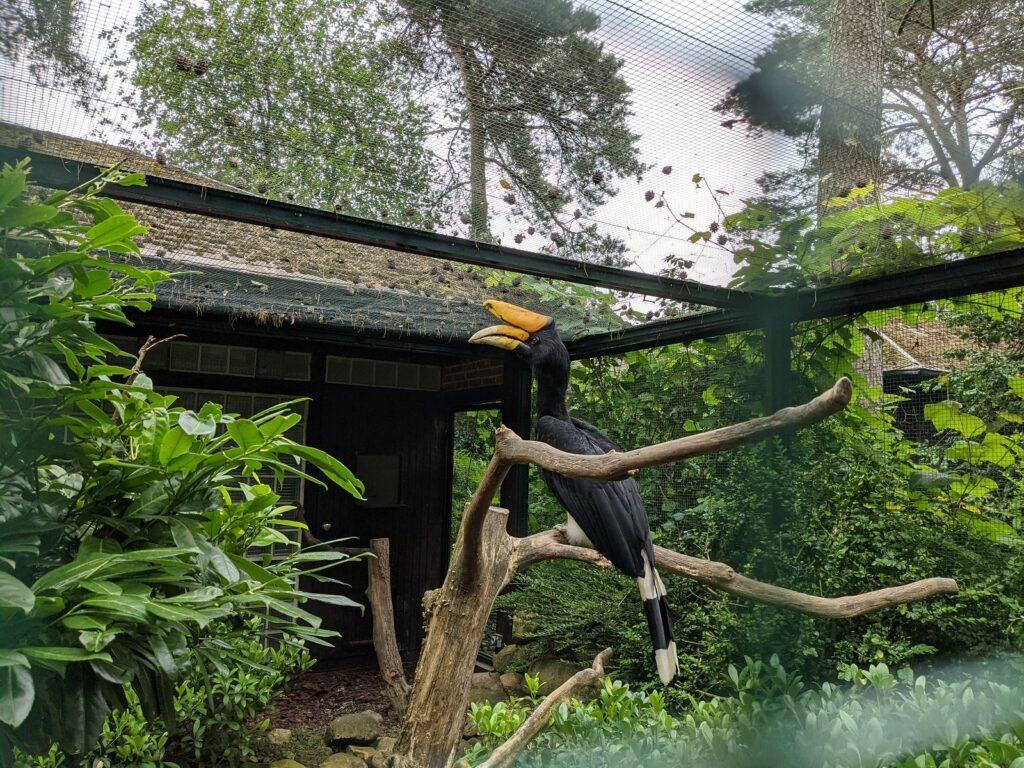 Ein Doppelhornvogel im Vogelpark Walsrode