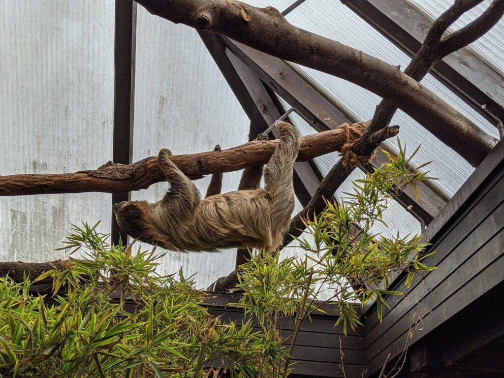 vogelpark walsrode faultier