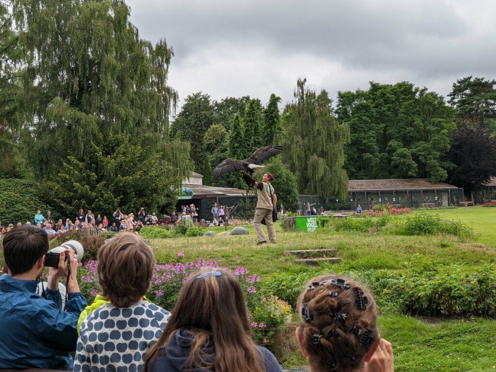 vogelpark walsrode flugshow