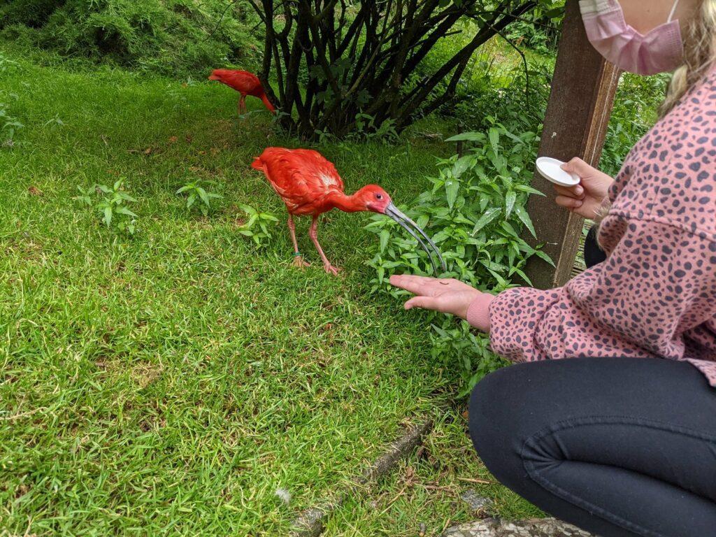 vogelpark walsrode scharlachsichler