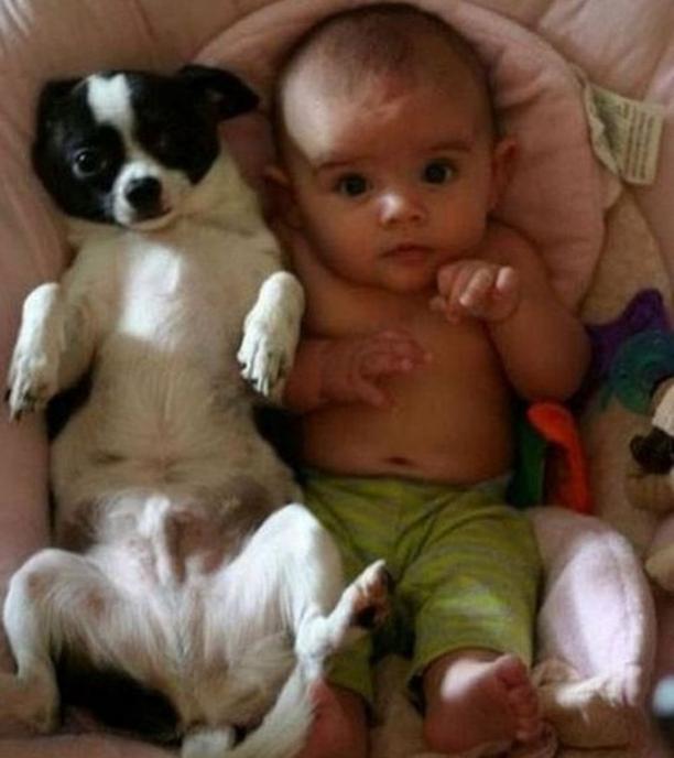 Dog-Content