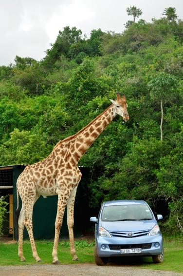 Elternzeit in Südafrika
