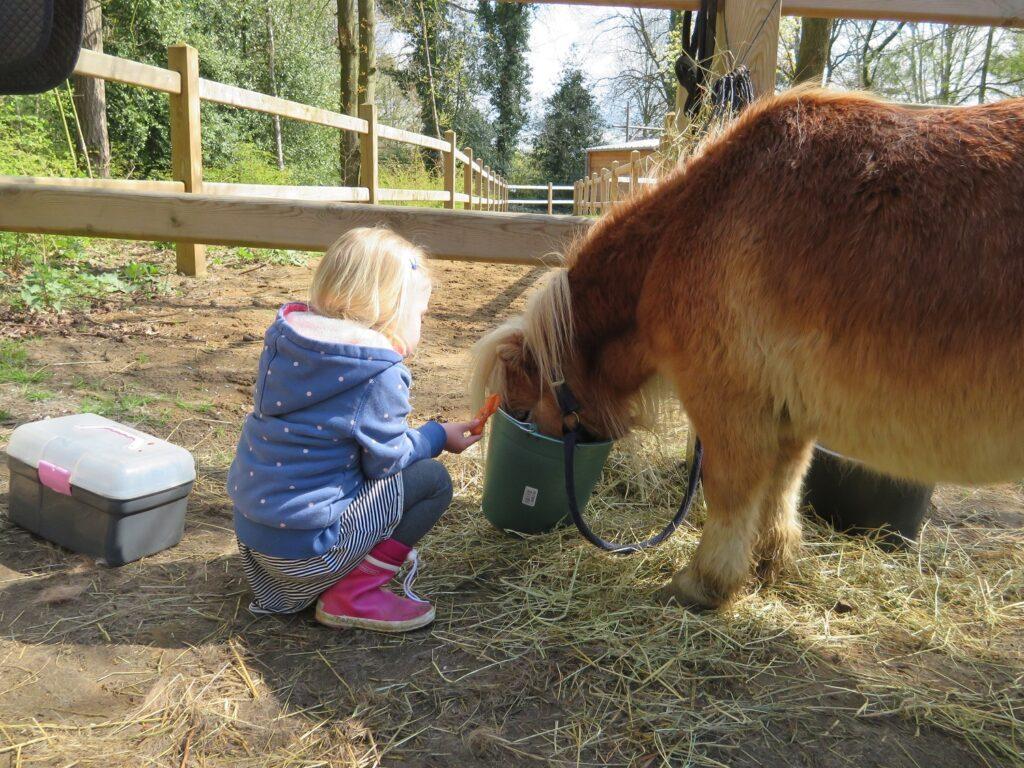 Center Parcs Erperheide Pony