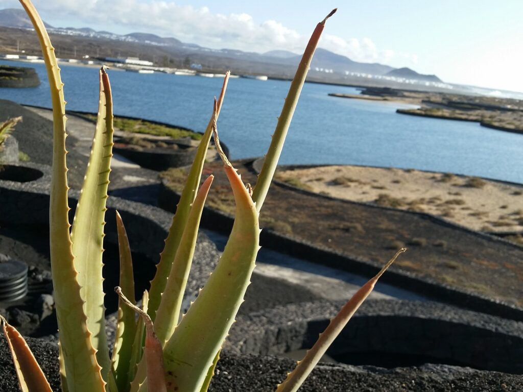 Club La Santa Lanzarote Kaktus