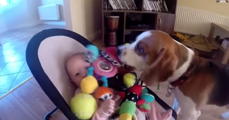 Guilty dog apologizes baby for stealing her toy It is never too late for apologize for friends. YouTube