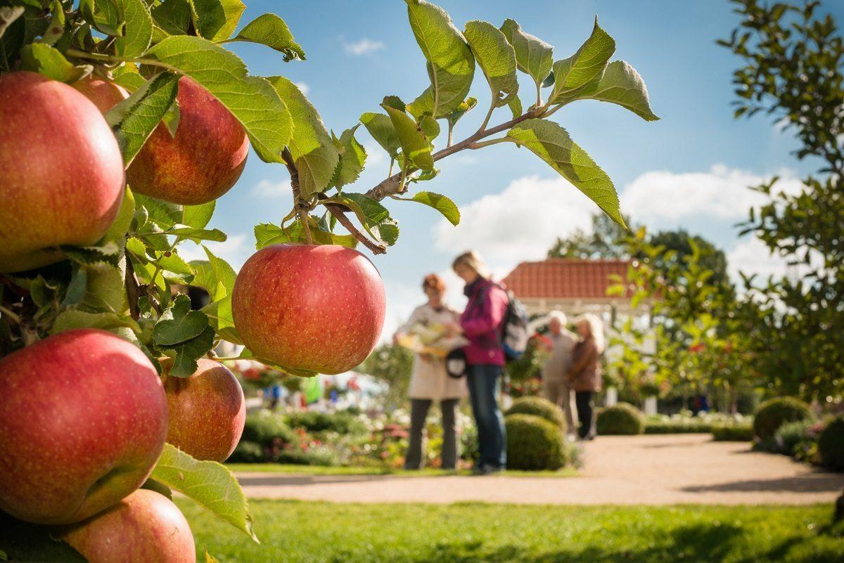 Äpfel und Birnen IGS