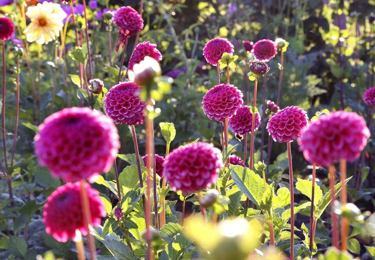 Tolle Blumen auf der IGS