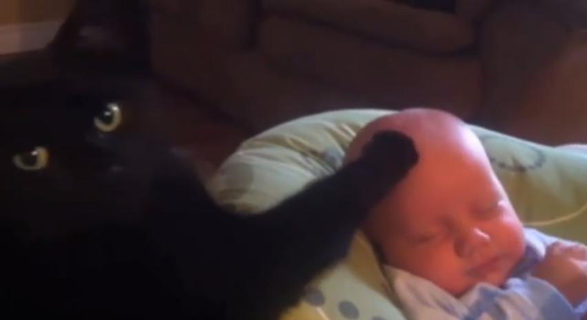 Katze streichelt Baby in den Schlaf YouTube