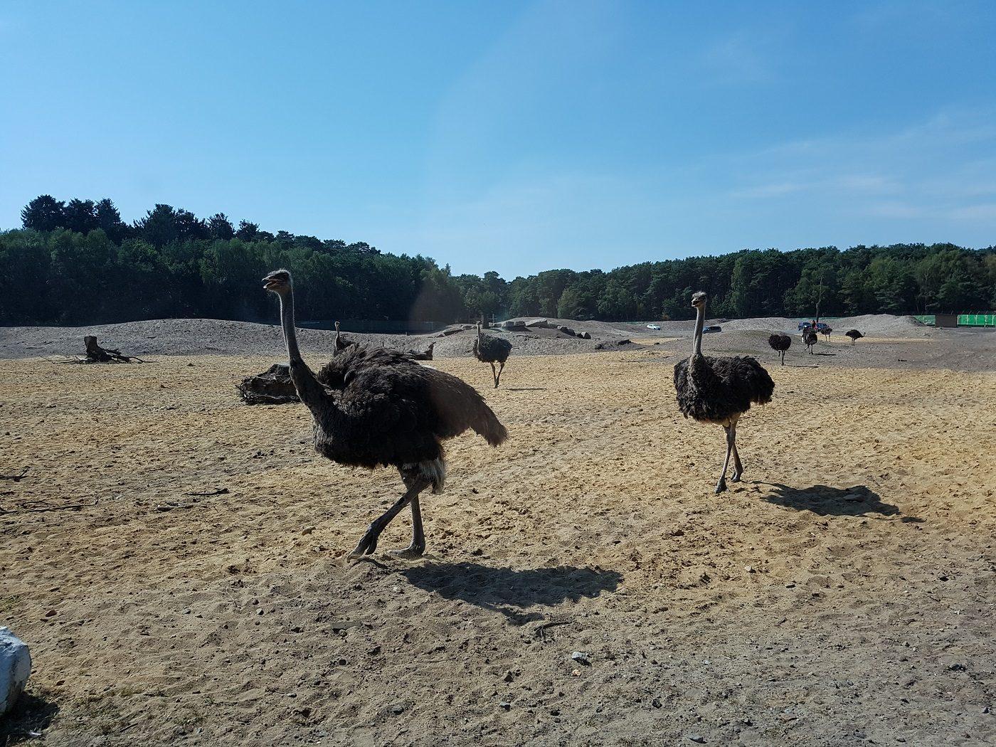serengeti park hodenhagen übernachtung angebot
