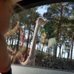 Serengeti Park Hodenhagen Vogelstrauß