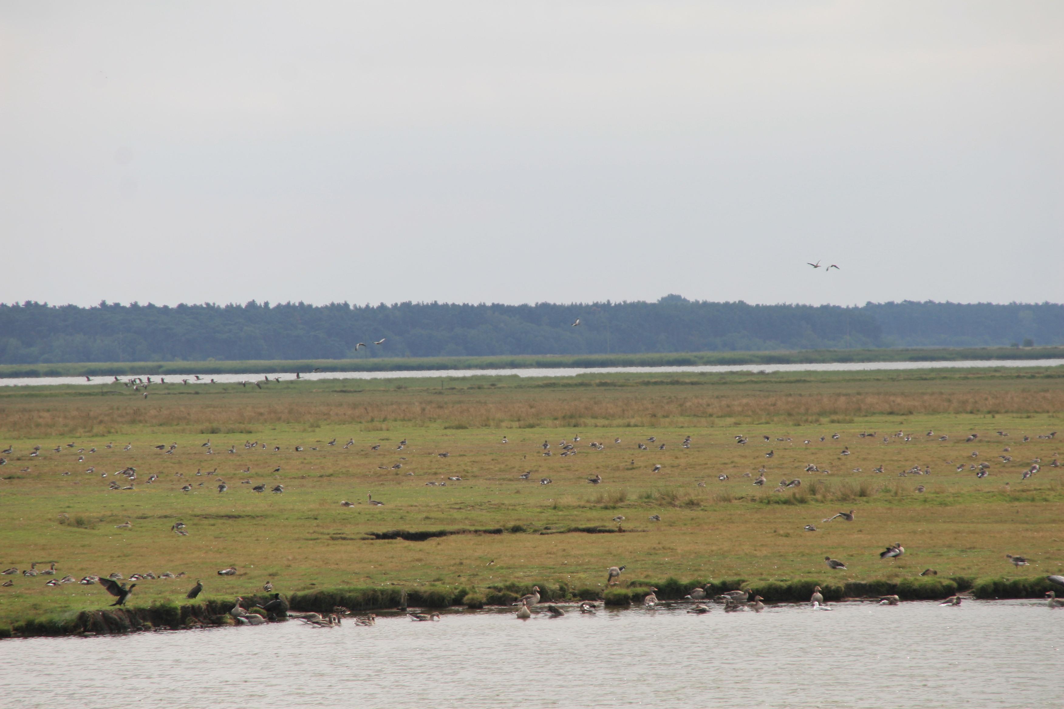 Zingst Fischland 3